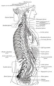 What Is Human Anatomy And Physiology 1 Human Physiology Print Version Wikibooks Open Books For An Open
