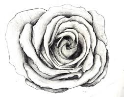 flower sketch illustration and animation blog clip art library