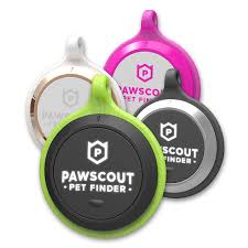 keep your dog safe and fit with these smart collars