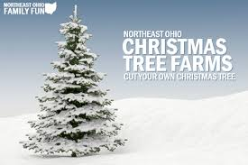Pine Tree Barn Wooster Oh Cut Your Own Christmas Trees In Northeast Ohio