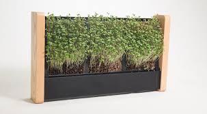ecoqube tiny indoor vertical garden grows micro veggies on its