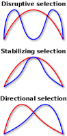directional selection wikipedia