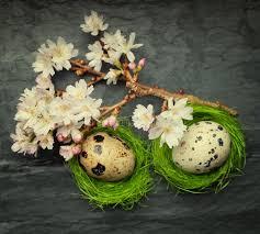 imagenes flores relajantes dos pequeños huevos en jerarquías verdes minúsculas laterales con