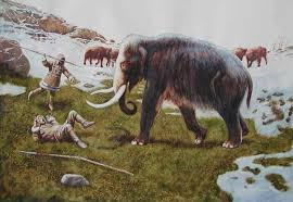 fascinating facts woolly mammoth