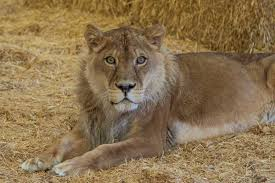 Iowa wild animals images Rescuing animals helping them thrive at wild animal sanctuary jpg