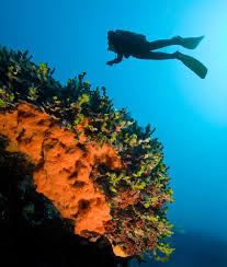 upgrade scuba diver to open water diver u2013 liamis dive centre