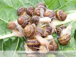 Where Can You Find Snails In Your Backyard Things To Know Before Starting Your Snail Farming Business Snail