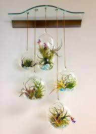 exceptional small narrow garden ideas part 2 air plant terrarium
