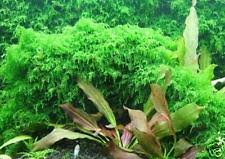 125 gallon fish tank ebay