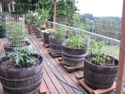 Patio Container Garden Ideas Container Veggie Gardening Ideas Wonderful Patio Vegetable Garden