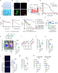 targeted apoptosis of senescent cells restores tissue homeostasis