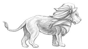 sketches lions drawing pencil