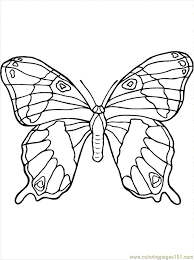 81 coloring insects images butterflies