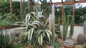 the cactus u0026 succulent collection of winterbourne house u0026 garden