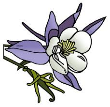 State Flower Of Colorado - united states clip art by phillip martin colorado state flower