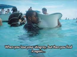 Stingray Meme - animal capshunz stingray funny animal pictures with captions