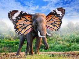4 slick ways to a memory like an elephant when learning a