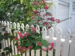 picket fences pretty old houses picket fences of key west