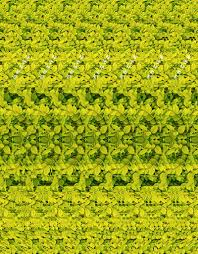 3d photograph giraffe can you see it magic eye illusions