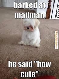 Sad Dog Meme - dog memes barked at mailman late night lol pinterest dog