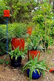 cacti diana u0027s designs austin