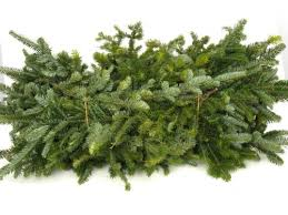 fraser fir tree fresh fraser fir roping garden goods direct