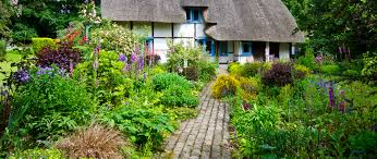 the english cottage plants for an english cottage garden watson s