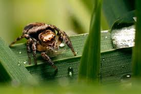 jumping spider desktop and mobile wallpaper animals town 1920 1080