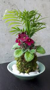 Indoor Plants Arrangement Ideas by 289 Best Kokedama Images On Pinterest String Garden Bonsai And