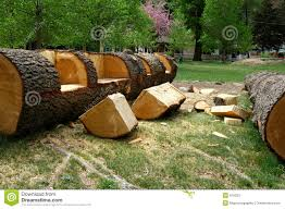 Rustic Log Benches - bench split log bench for sale make your own rustic log bench