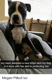 Love My Mom Meme - my mom adopted a new kitten and my dog is in love with her and is