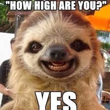 How High Are You Meme - how high are you yes animals fun meme sloth high yes