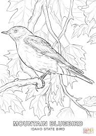 coloring pages bird idaho state bird coloring page free printable coloring pages