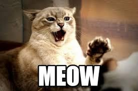 Angry Cat Meme - meow angry cat meme on memegen