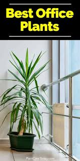 best plant for office best indoor plants for the office