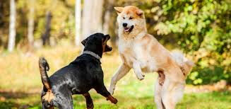 hyperactive dogs how to stop dog aggression and calm a hyper dog trudog