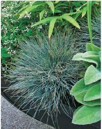 growing ornamental grasses quarto homes
