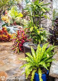 closeup southern california rainy garden