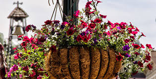 flower baskets flower baskets placerville downtown