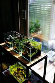How To Make Fish Tank Decorations At Home Best 25 Mini Aquarium Ideas On Pinterest Food Crafts Jello