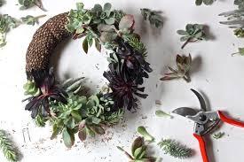 succulent wreath diy a succulent wreath to display all year gardenista