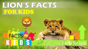 lions facts for kid best lion 2017
