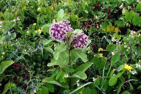 maine native plants native plants u2013 merryspring nature center