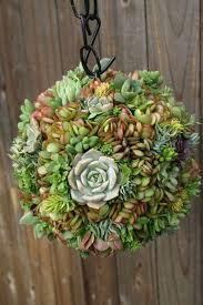 decoration container designs succulent plants sunset urban chic