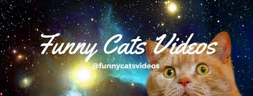 Cats In Small Spaces Video - funny cats videos 1 041 photos pet supplies