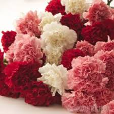 Carnations In Bulk Capitalizing On Carnations By Fundraising With Flowers From The