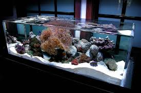 Coral Reef Home Decor The 1 Million Aquarium Customized Fish Tanks As Home Decor Wsj