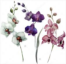 Flower Orchid 19 Flower Drawings Free Psd Ai Eps Format Download Free