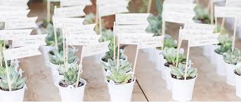favors for wedding guests succulent wedding favors jemonte