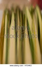 palms for palm sunday holy week palm sunday mass stock photo royalty free image